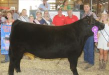 Noble County Fair Grand Champion Steer