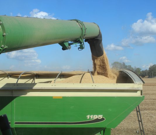 beans emptying into grain cart