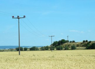 wheat-field with telephone wires