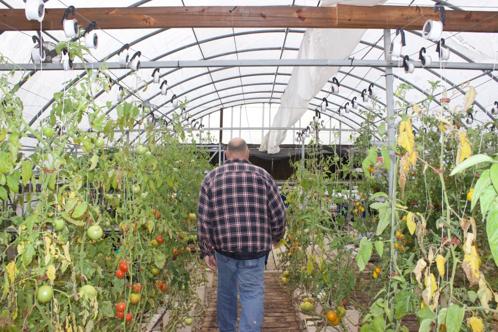 David Clough walks down a row of plants in his greenhouse.
