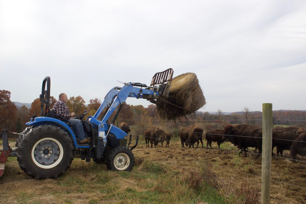 David Clough uses a tractor to put a round bale of hay in the pasture for his bison.