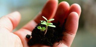 soil and seedling in hand