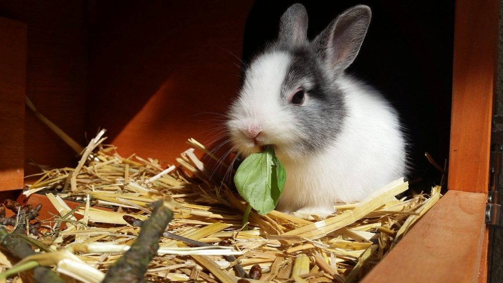 How to get started on your first 4-H rabbit project - Farm ... Rabbit House Design Cold Weather on football rabbits, cold war rabbits, pets rabbits, six rabbits, green rabbits, racing rabbits, black rabbits, babies rabbits,