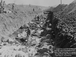 1924 cattle slaughtered