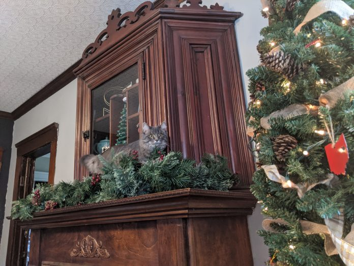 Kym Seabolt's cat Kia on her new cabinet