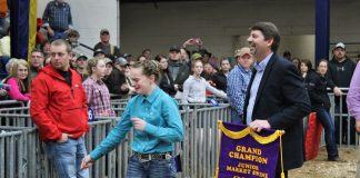 jr swine show grand champion