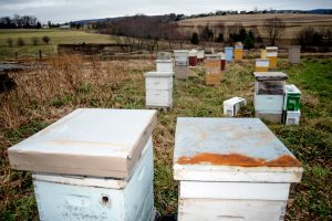 beehives on farm