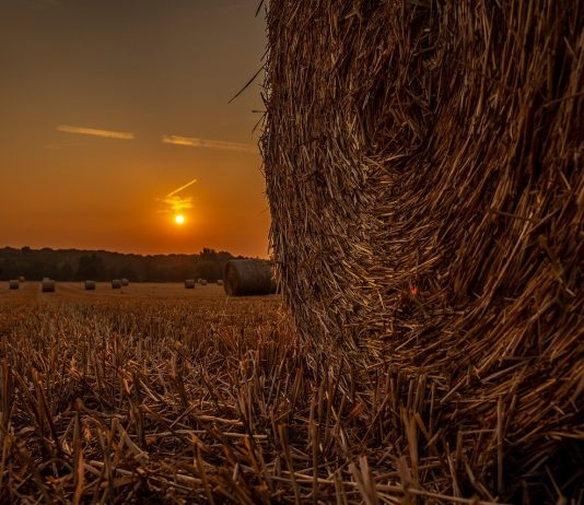 sunset on a hay bale