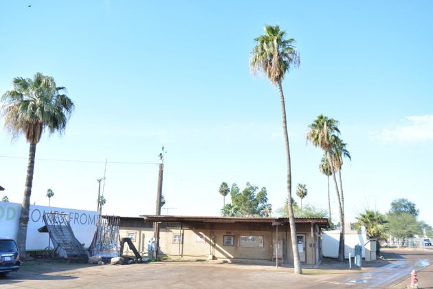 Rovey Dairy palm trees