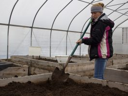 A woman works with a shovel in a raised growing bed in a high tunnel.
