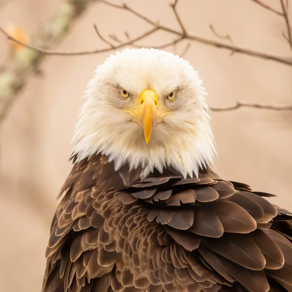 Local Photographers Drawn To Eagles Farm And Dairy