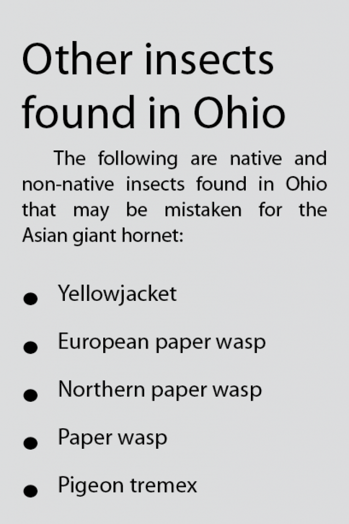 list of other insects found in Ohio