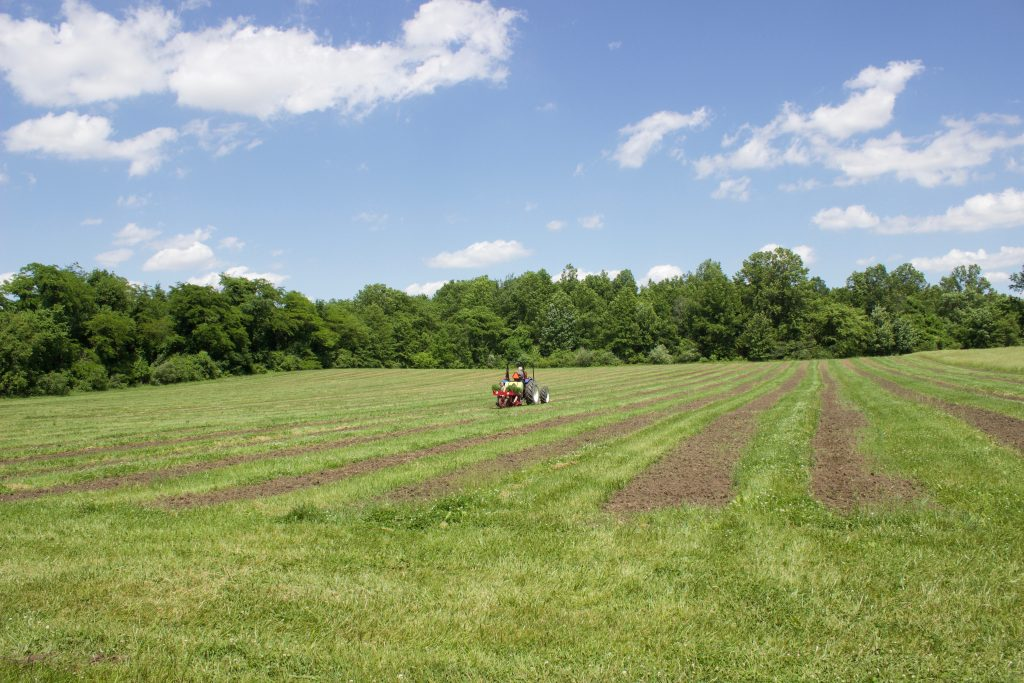 A tractor pulls a vegetable planter, planting hemp in a field.