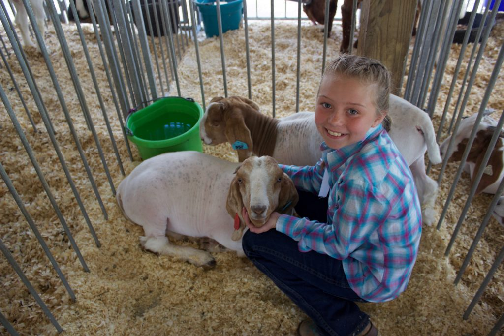 A young girl sits in a pen with two market goats.