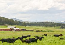 cattle farm