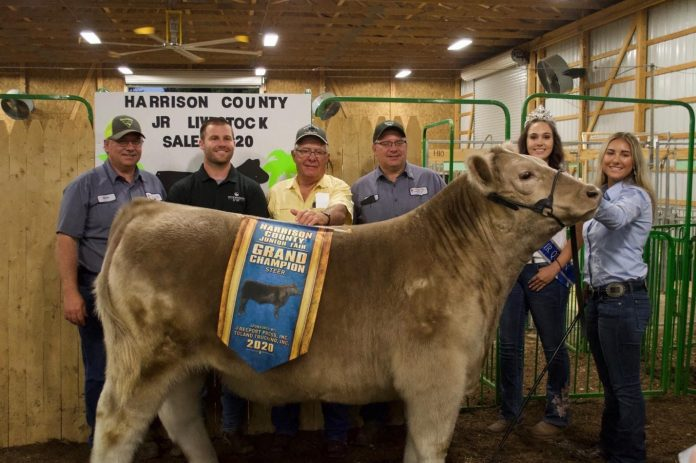 The grand champion market steer.