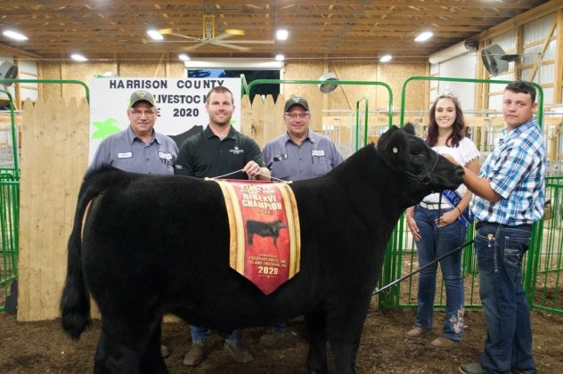 The reserve champion market steer.
