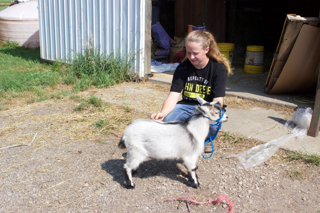 A girl crouches next to a pygmy goat.