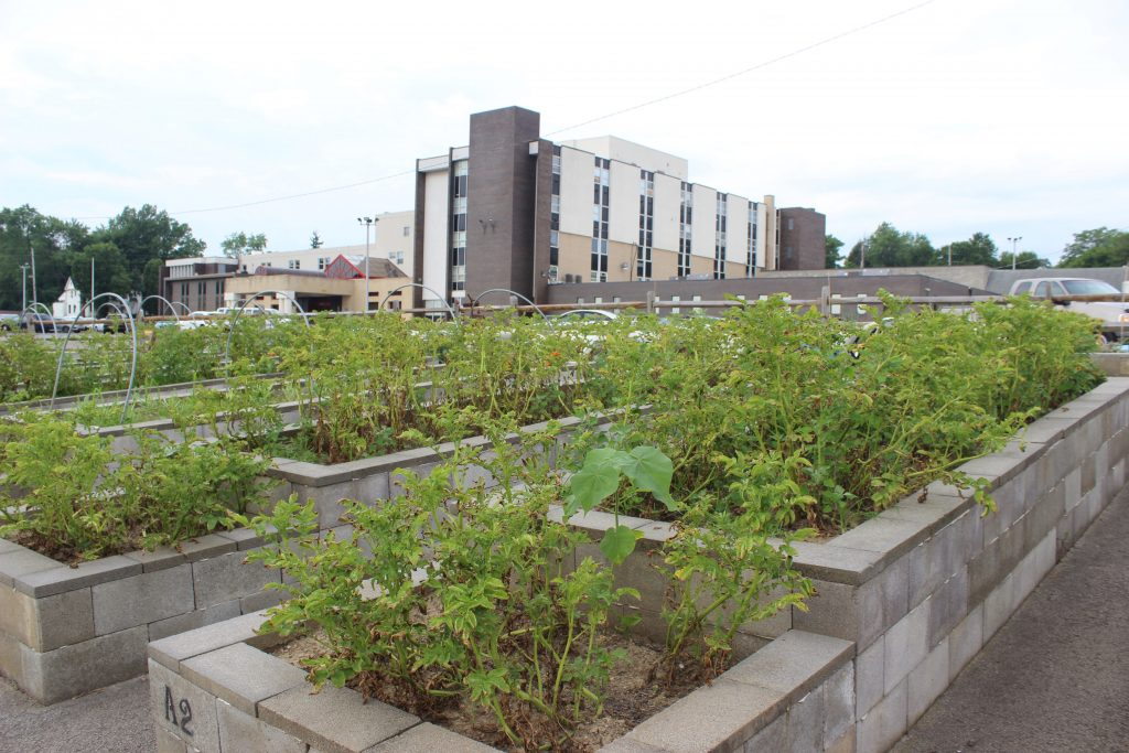 Plants grow in raised beds in a city.