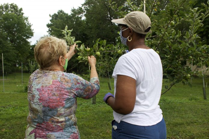 Two women example an apple tree.