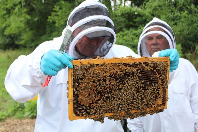 men in beekeeping suits