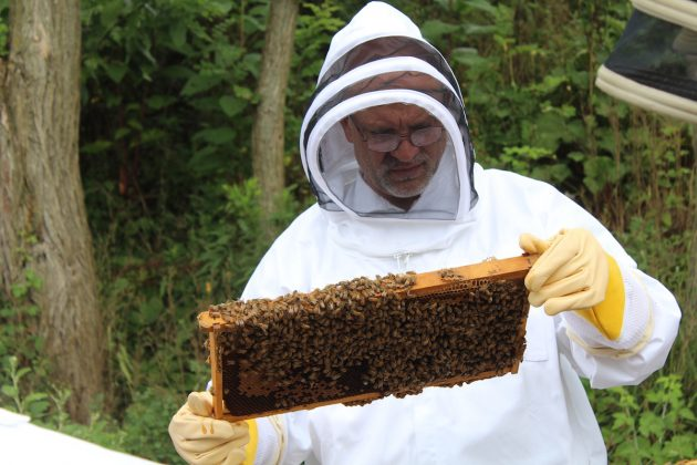 man looking at bee hive frame