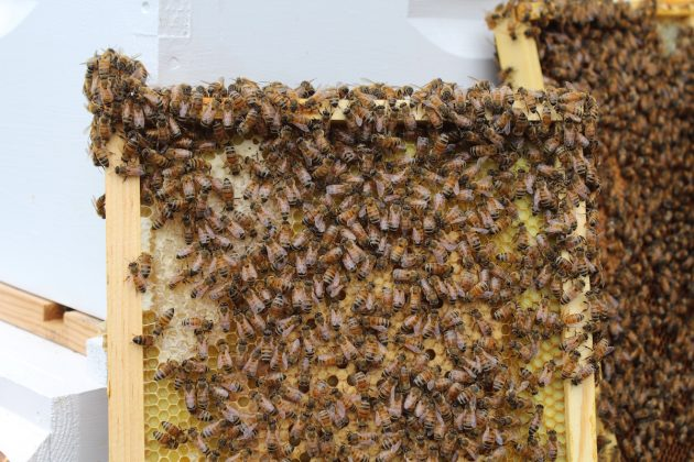 bees on bee hive frame