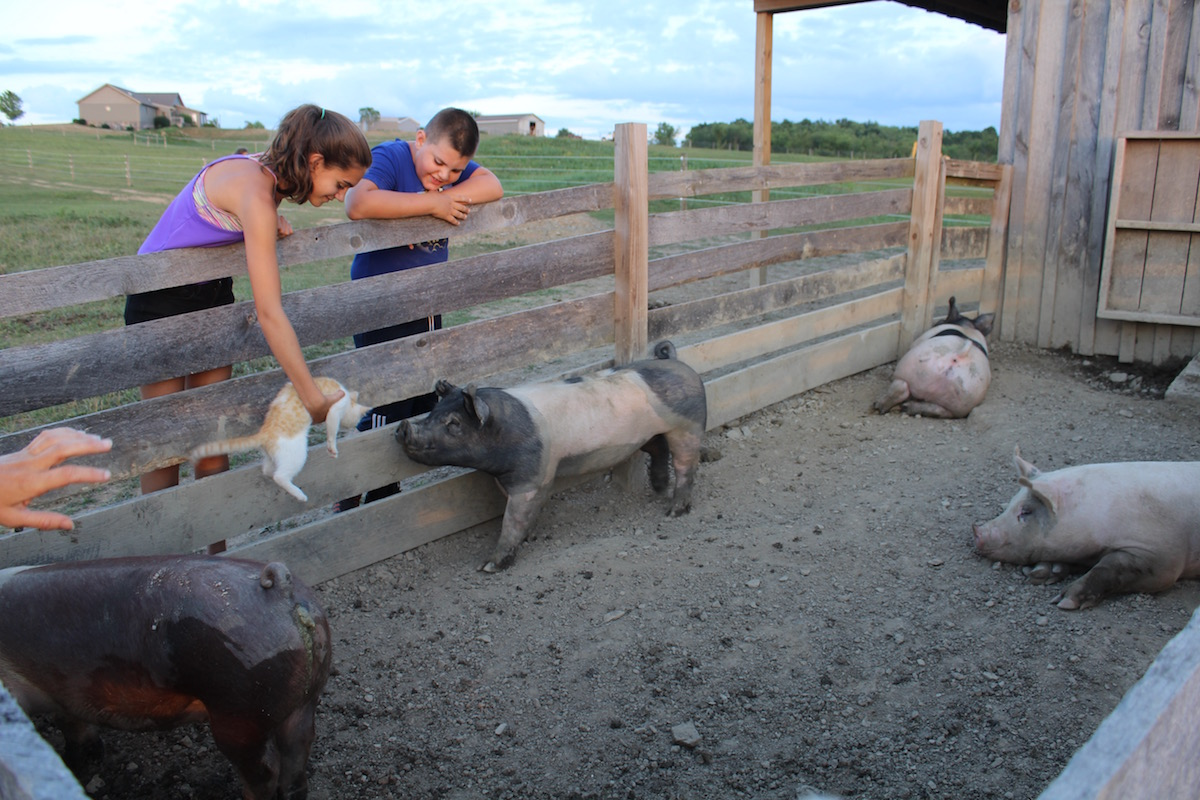 kids and pigs