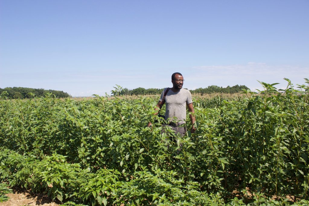 A man stands in a jute field.
