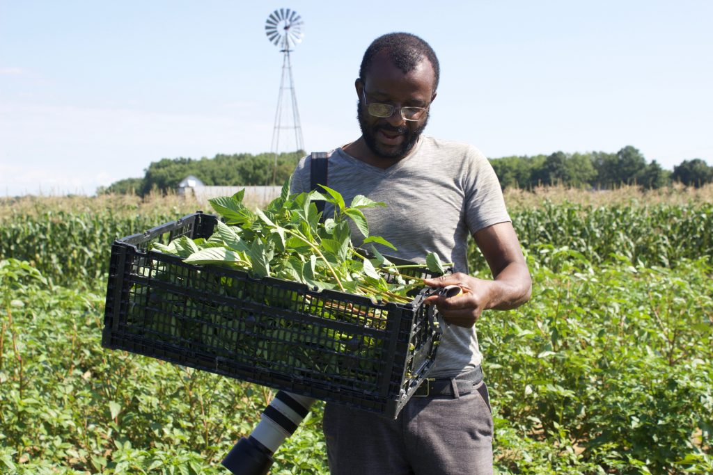 A man holds a basket of jute in a field.