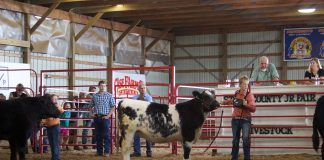A young woman stands in a show ring with a black and white beef steer.