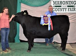 Grand Champion Market Steer