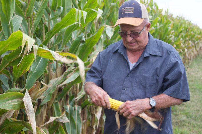 A man holds an ear of corn in both hands, standing in front of a corn field. He is looking at the ear of corn and wearing a baseball hat and glasses.