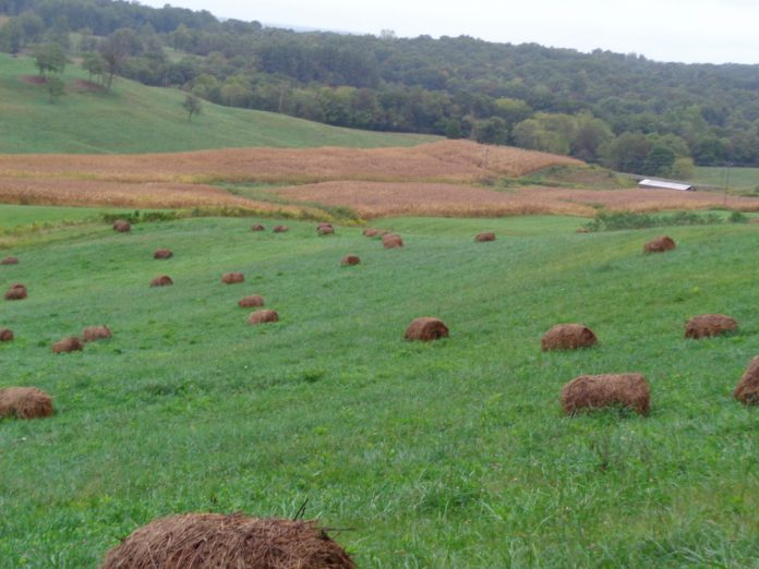 stock pile with hay
