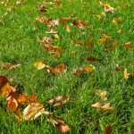 Autumn leaves on green grass.