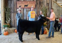 Grand Champion Feeder Calf Steer