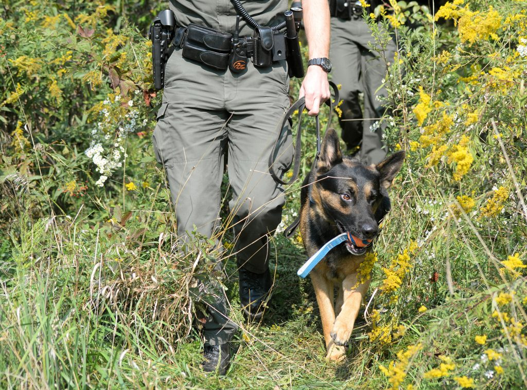 A dog and a wildlife officer walk out of the woods.