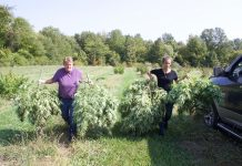 Two woman walk alongside a truck, carrying hemp plants.