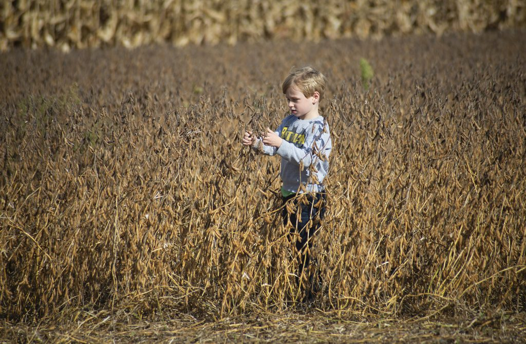 A young boy stands in a soybean field, looking at the plants.