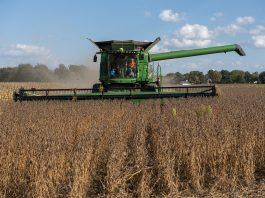 A combine harvesting soybeans in a field.