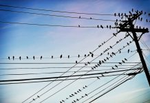 power lines with birds on them