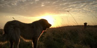 dogs at sunrise