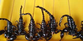 scorpions on sticks at a Chinese market