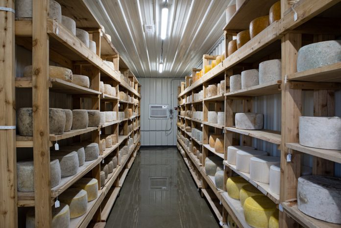 cheese in an aging room
