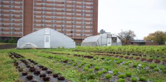 Crops and greenhouses at an urban farm, in Cleveland.