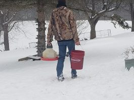 frozen bucket