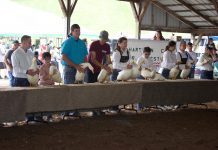 Youth stand behind a table with market ducks in a show ring.