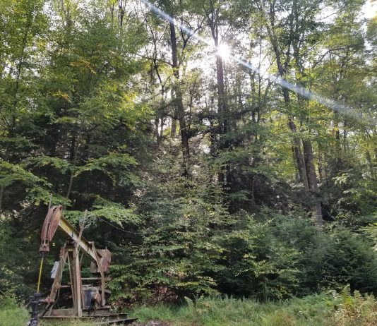 oil well sits in forest