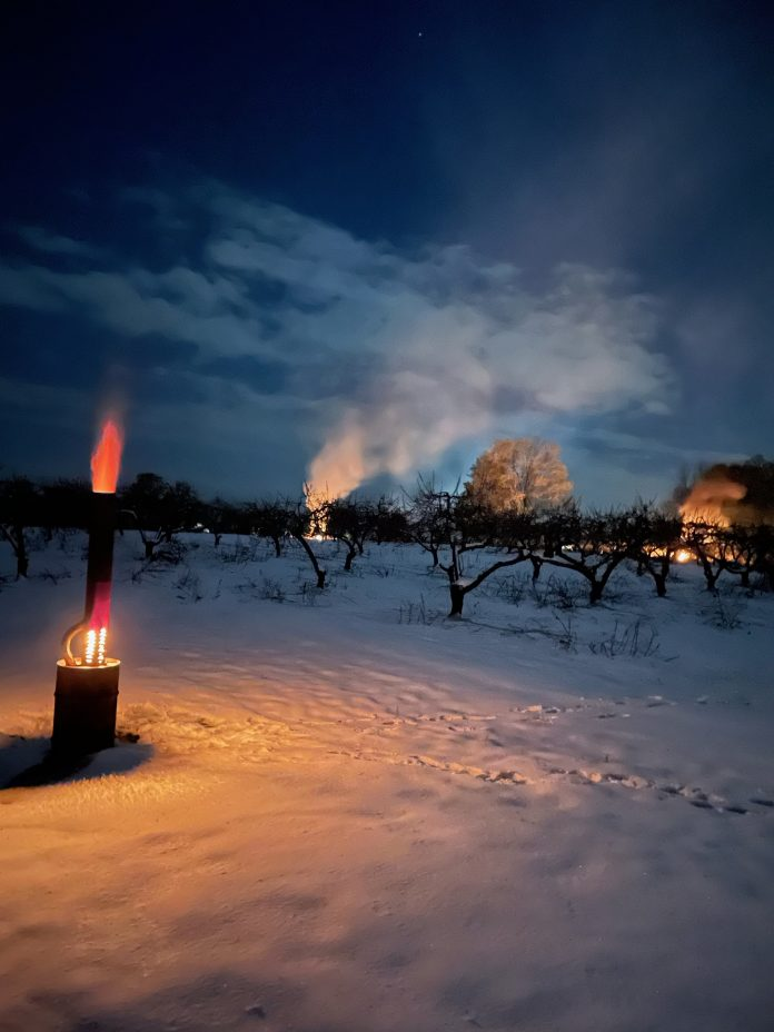 Fires lit in a snow-covered peach orchard.