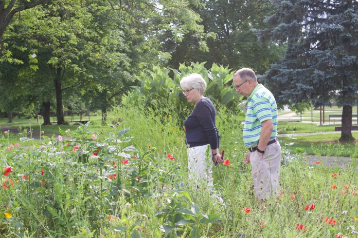 A woman and a man look over plants in a pollinator garden.